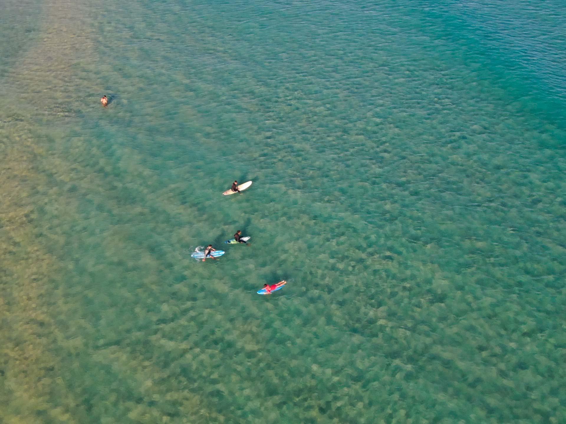 Surf-Chia